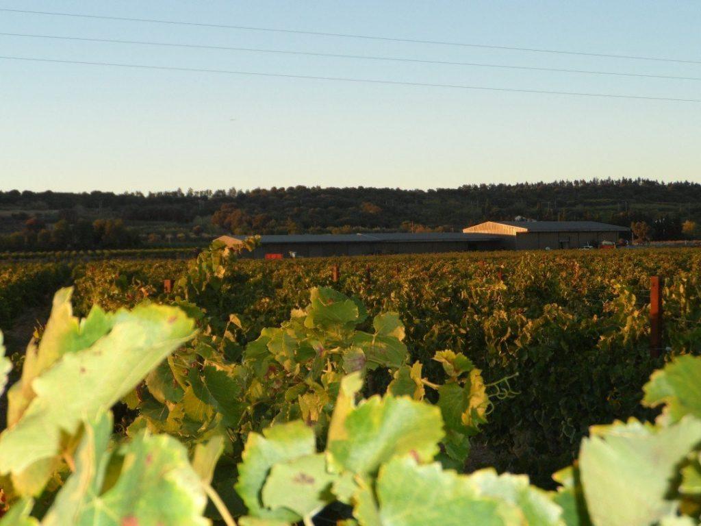 isolierte Weinkellereien